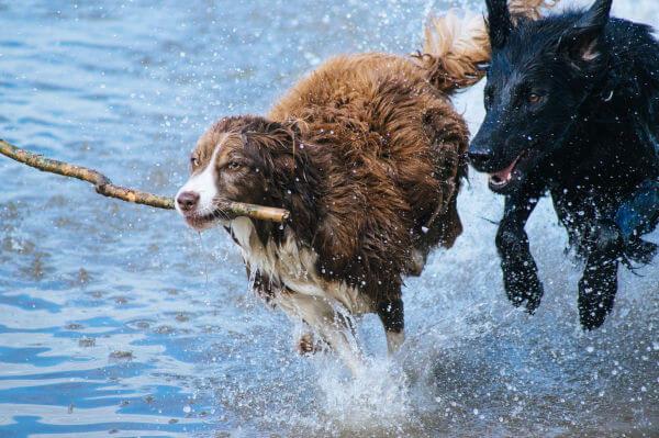 Dogs Tierzentrum