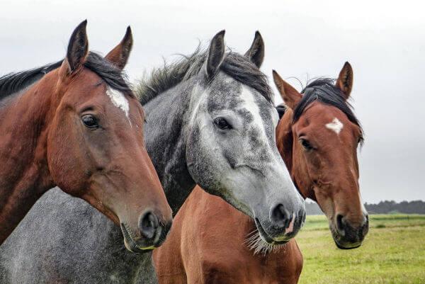 Horses Tierzentrum